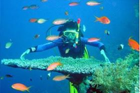 Picture for category Nha Trang Day Tours