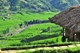 Picture of Sapa 2 days 1 night (Overnight Bungalow in Ta Van Village) - VTTSP2