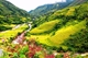 Picture of Sapa 3 days 2 nights Trekking Tour (2 nights in hotel) - VTTSP7