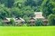 Picture of Hanoi - Mai Chau - Pu Luong National Reserve Tour