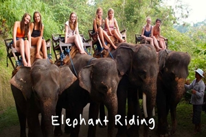 Picture of Luang Prabang – Elephant Riding & Trail of Falls
