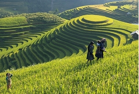 Picture for category Vietnam Laos Cambodia Tours
