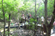 Picture of Can Gio Mangrove Forest 1 day tour – private tour