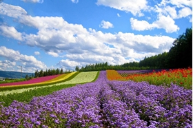 Picture of Dalat Countryside Tour