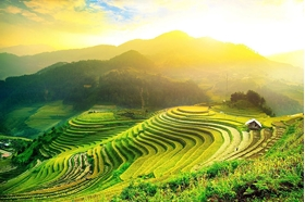 Picture of Hanoi - Nghia Lo - Tu Le - Mu Cang Chai 3 days 2 nights