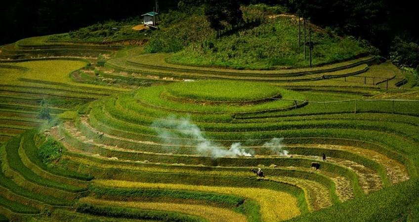 Picture of Mu Cang Chai